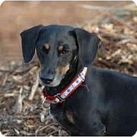 Adopt A Pet :: Jordan - Ft. Myers, FL