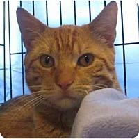 Adopt A Pet :: Gabriel - Jenkintown, PA