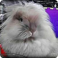 Adopt A Pet :: Maximus - Williston, FL