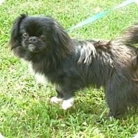 Adopt A Pet :: Romie - Ft. Lauderdale, FL
