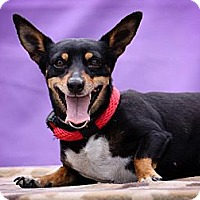 Adopt A Pet :: Mona - Anaheim, CA