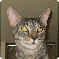 Adopt A Pet :: Jemma - Jenkintown, PA