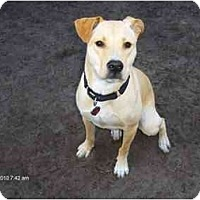 Adopt A Pet :: Kaylee - Orange Park, FL