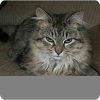 Adopt A Pet :: Milo 2 - Putnam Valley, NY