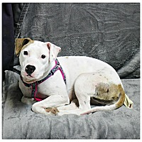 Adopt A Pet :: Cindy - Forked River, NJ
