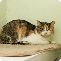 Adopt A Pet :: Tammy - Chicago, IL