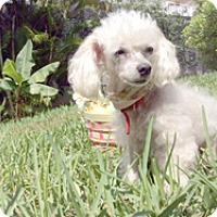 Adopt A Pet :: MOPSY - Melbourne, FL