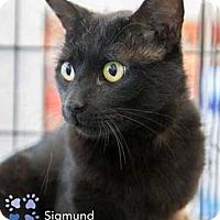 Adopt A Pet :: Sigmund - Merrifield, VA