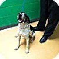 Adopt A Pet :: Josephine-URGENT - Providence, RI