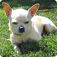 Adopt A Pet :: Harold - San Jose, CA