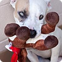 Adopt A Pet :: Buster - Visalia, CA