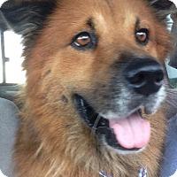 Adopt A Pet :: Brandon - Ocean Ridge, FL