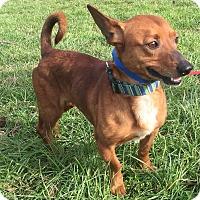 Adopt A Pet :: Hank - Waldorf, MD
