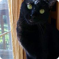 Adopt A Pet :: Casey - Duluth, GA