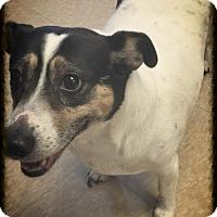 Adopt A Pet :: Sugar Baby - Groton, MA