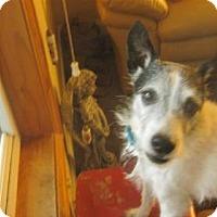 Adopt A Pet :: Mr. Fuzzybear - Rochester, MN