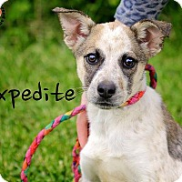 Adopt A Pet :: Expedite - Joliet, IL