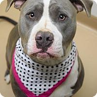 Adopt A Pet :: Juneau - Dublin, CA