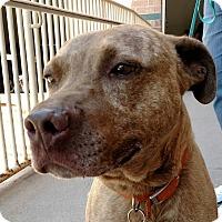 Adopt A Pet :: Beebs - Detroit, MI