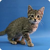 Adopt A Pet :: Zoe - Overland Park, KS
