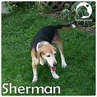 Adopt A Pet :: Sherman - Pittsburgh, PA