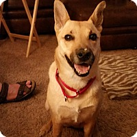 Shepherd (Unknown Type) Mix Dog for adoption in Newport, Michigan - Cleo