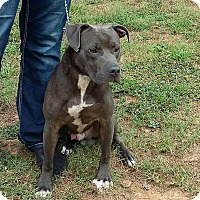 Adopt A Pet :: Derby - Pensacola, FL