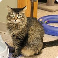 Adopt A Pet :: Daisey - Byron Center, MI