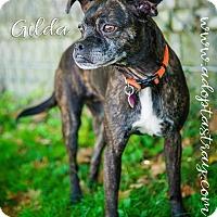 Adopt A Pet :: Gilda - Newport, KY