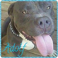 Adopt A Pet :: Adolf - Gerrardstown, WV