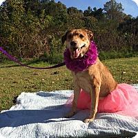 Adopt A Pet :: Sydney - Salisbury, NC