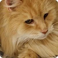 Adopt A Pet :: Rufus - Worcester, MA
