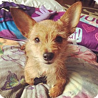 Adopt A Pet :: Lesley Stahl - Jersey City, NJ