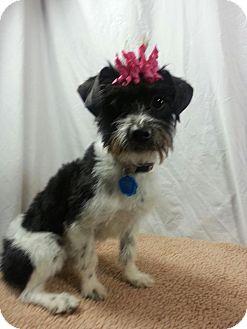Terrier (Unknown Type, Small) Mix Dog for adoption in Ogden, Utah - Queenie