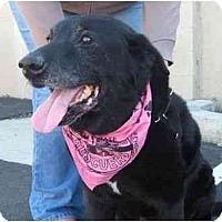 Adopt A Pet :: MURRAY - La Mesa, CA