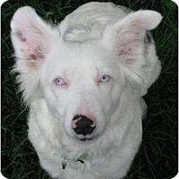 Adopt A Pet :: Cassie - Blooming Prairie, MN