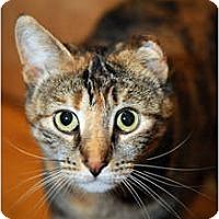Adopt A Pet :: Vana - Farmingdale, NY