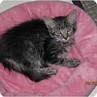 Adopt A Pet :: Meg - Catasauqua, PA