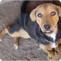 Adopt A Pet :: Yappy - Fowler, CA