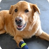Adopt A Pet :: Jade - Scottsdale, AZ