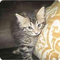 Adopt A Pet :: Sekani - Milwaukee, WI