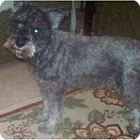 Adopt A Pet :: Jay R - Albany, NY