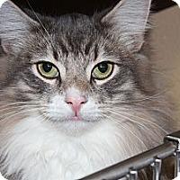 Adopt A Pet :: Malcolm - Santa Monica, CA