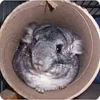 Adopt A Pet :: Basil - Avondale, LA