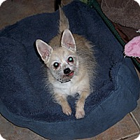 Adopt A Pet :: Princess - Tucson, AZ