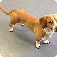 Adopt A Pet :: Bleu - Meridian, ID