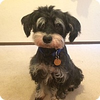 Adopt A Pet :: Phoebe - Lynnwood, WA