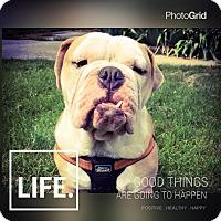 Adopt A Pet :: Fez - Park Ridge, IL