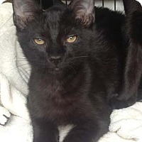 Adopt A Pet :: Herbie - Merrifield, VA