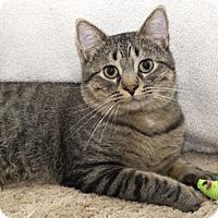 Adopt A Pet :: Pokey - Lombard, IL